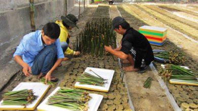 Photo of WWF và Nokia cùng thực hiện sáng kiến giảm nhẹ biến đổi khí hậu ở Thừa Thiên Huế