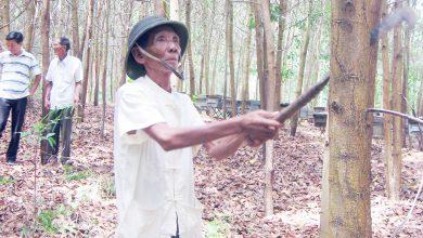 Photo of Bất cập trong giao đất, giao rừng cho dân