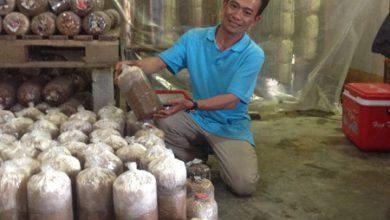 Photo of Thạc sĩ làm giàu từ trồng nấm