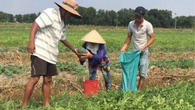 Photo of Quảng Điền hướng đến nông nghiệp bền vững