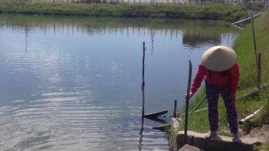 Photo of Tảo độc xuất hiện ở đầm Lập An