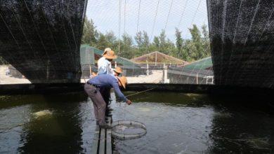 Photo of Hỗ trợ hơn 600 triệu đồng cho chủ cơ sở nuôi tôm bằng ao tròn