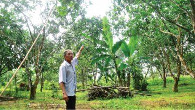 Photo of Tạo mô hình, tăng thu nhập cho người nông dân