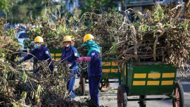 Photo of Tham vấn người trồng cây xanh