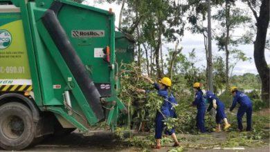 Photo of Huy động tổng lực để dọn rác cây xanh