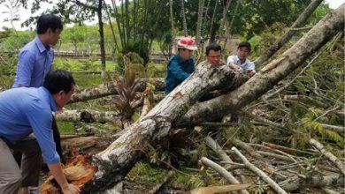 """Photo of Tái thiết & bảo tồn """"đặc trưng cây xanh"""" đô thị Huế"""