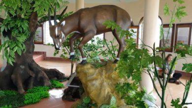 Photo of Thành lập Trung tâm Giáo dục du khách về bảo tồn động vật nguy cấp