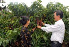 Photo of Cà phê Việt Nam hướng mục tiêu xuất khẩu 6 tỷ USD năm 2030