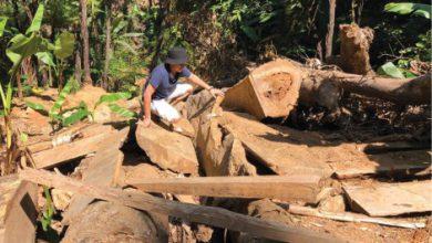 Photo of Phát hiện rừng ở A Lưới bị đốn hạ