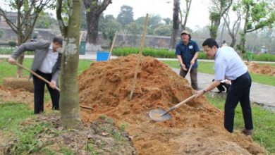 Photo of Gần 4 tỷ đồng đầu tư dự án chỉnh trang khu vực vườn mai trước Đại Nội